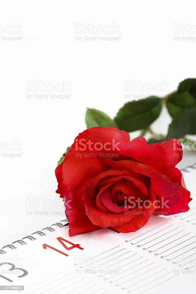 red love rose on valentine day calendar stock photo