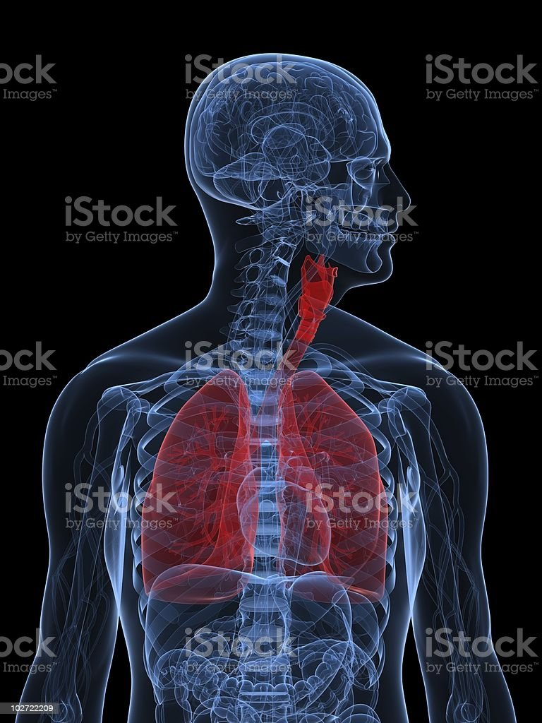 red lung royalty-free stock photo