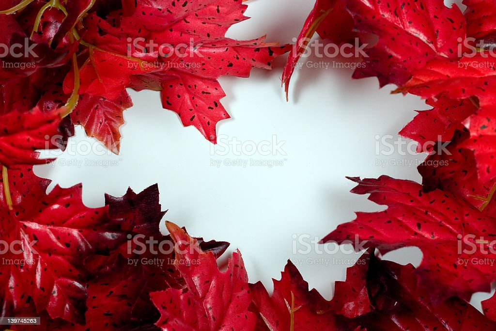 Red Maple Frame royalty-free stock photo