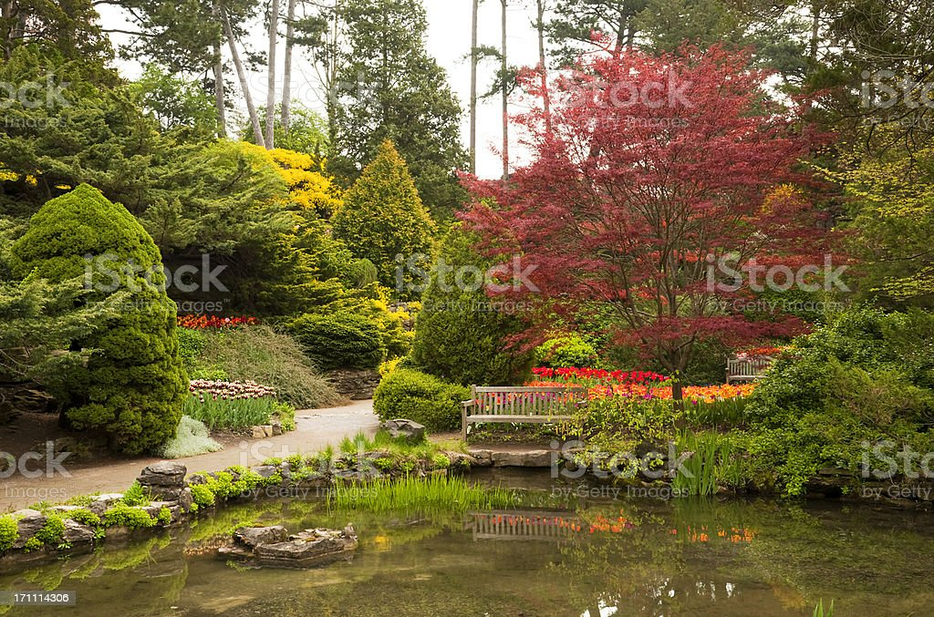 Red Maple In The Spring Garden stock photo