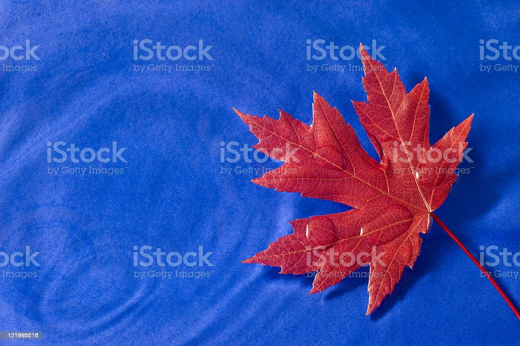 Red Maple Leaf Floating On Blue royalty-free stock photo