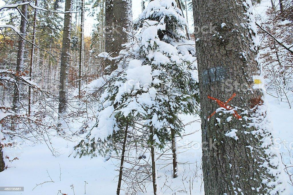 Red mark on tree stock photo