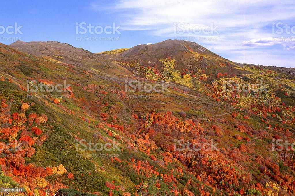 Red mountain maple Wellsville Mountains Cache County Utah stock photo