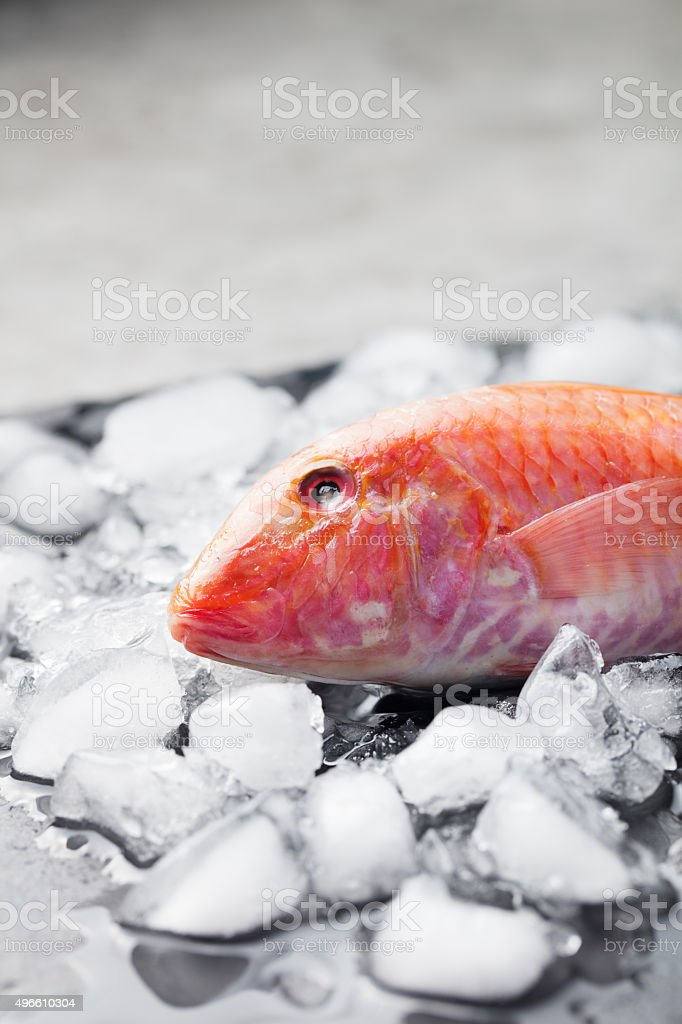 Red mullet fish on ice cubes Black stone board stock photo