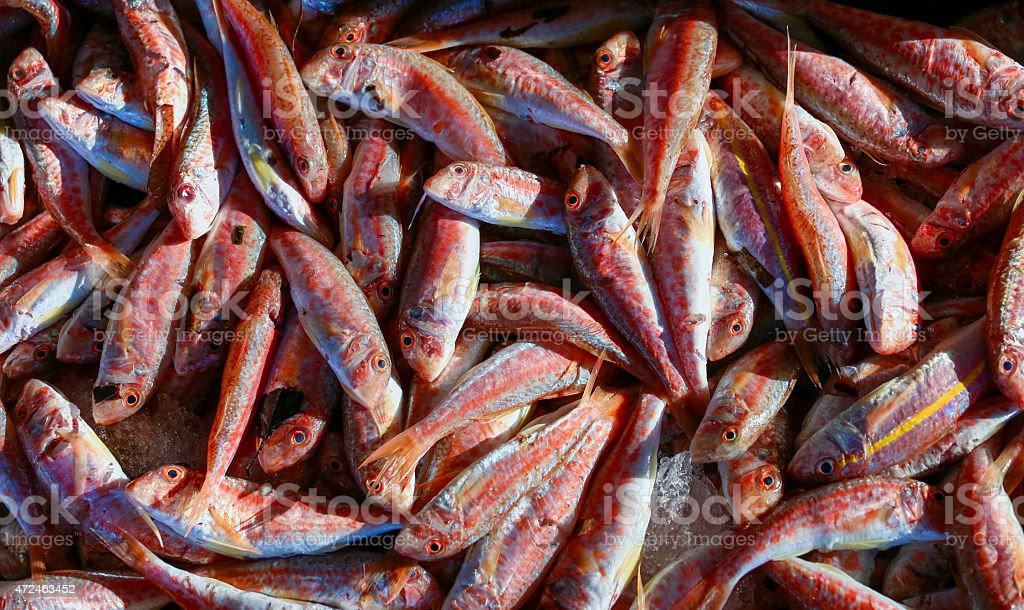 red mullet stock photo