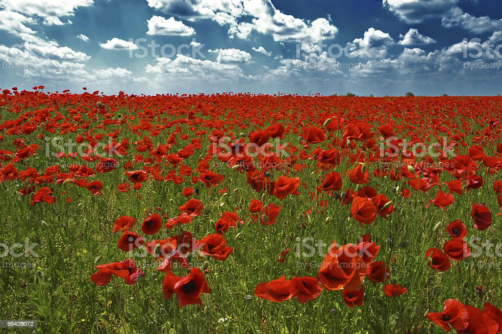 Red natural carpet royalty-free stock photo