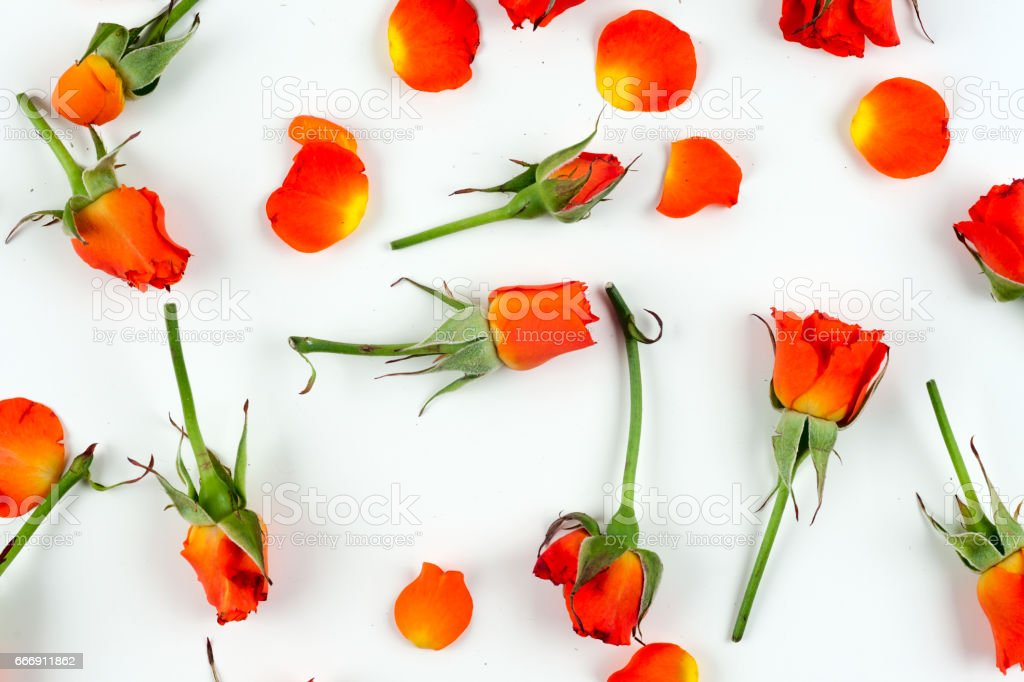 Red natural roses background stock photo