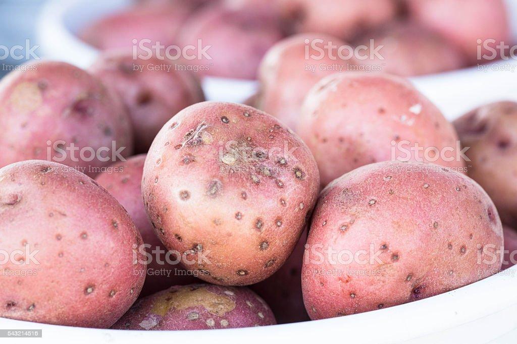 Red New Potatos at Farmers Market stock photo
