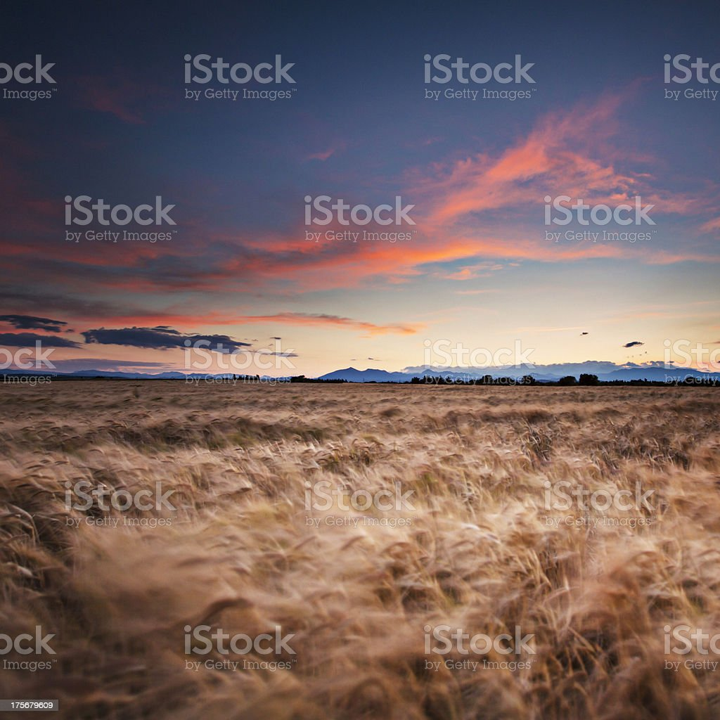 Red night royalty-free stock photo