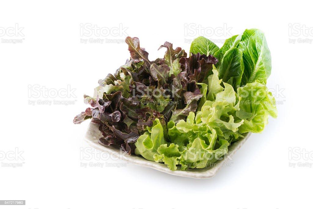 Red Oak and Green Oak salad. stock photo
