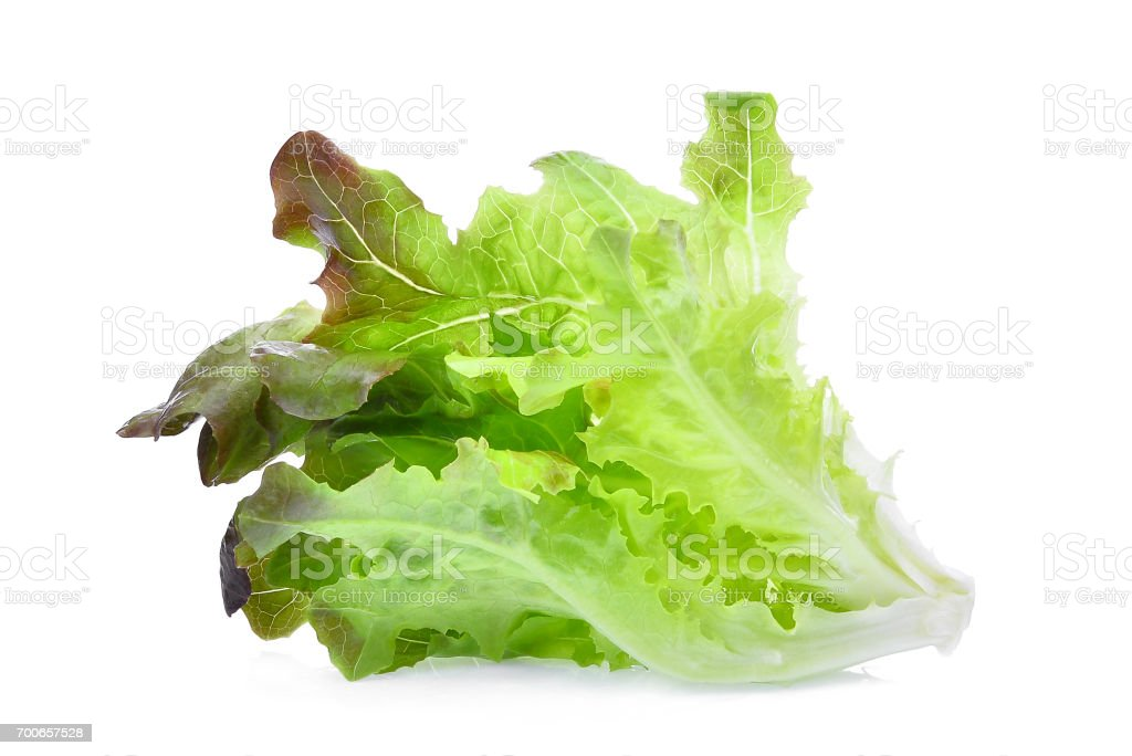 red oak lettuce isolated on white background stock photo