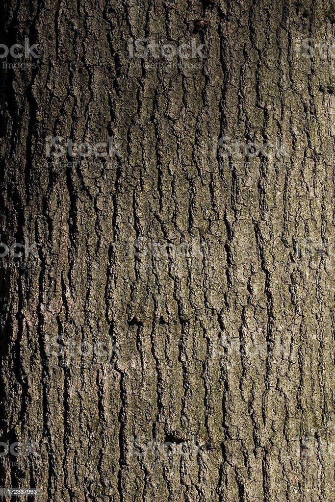 Red Oak Texture stock photo