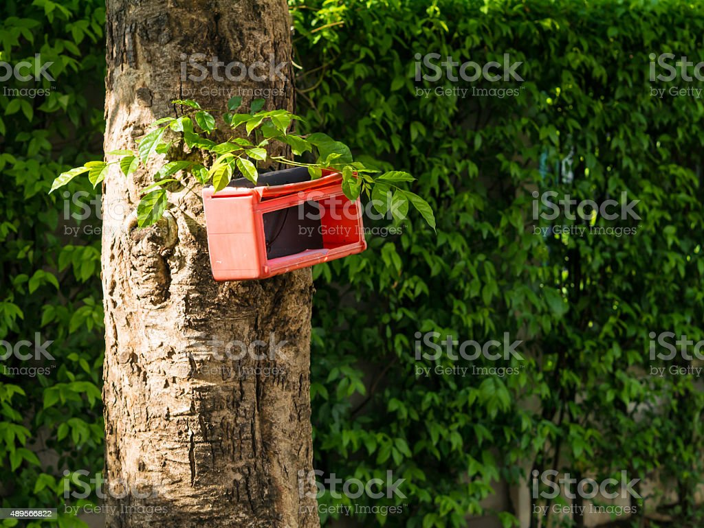 Red old plastic mail box on the tree. royalty-free stock photo