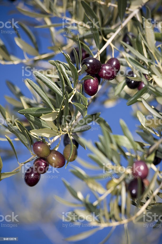red olives royalty-free stock photo