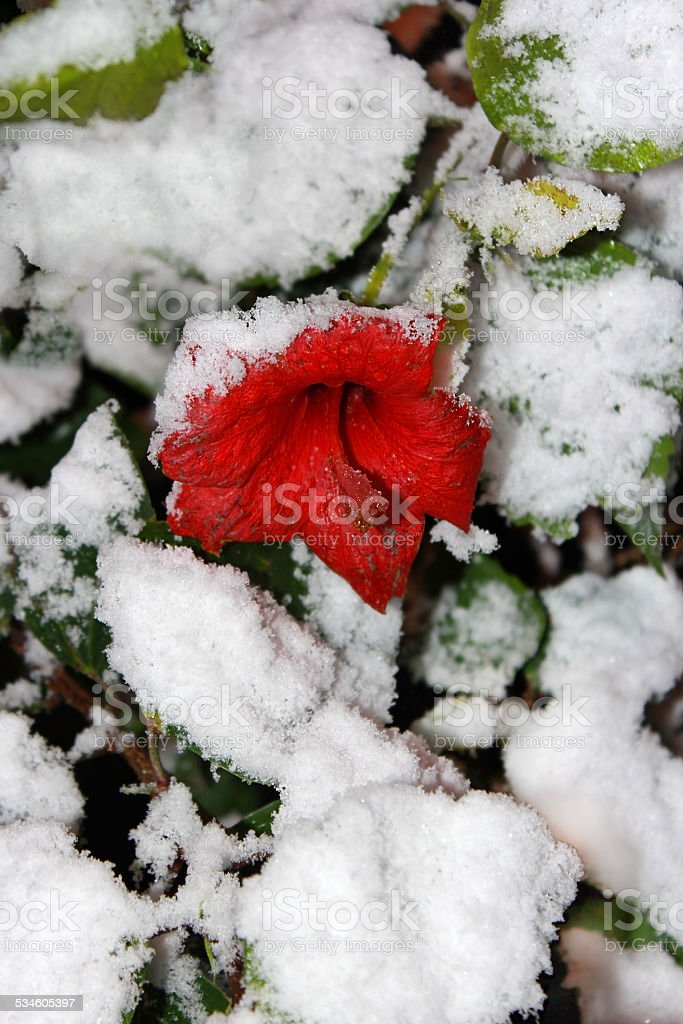red on white stock photo