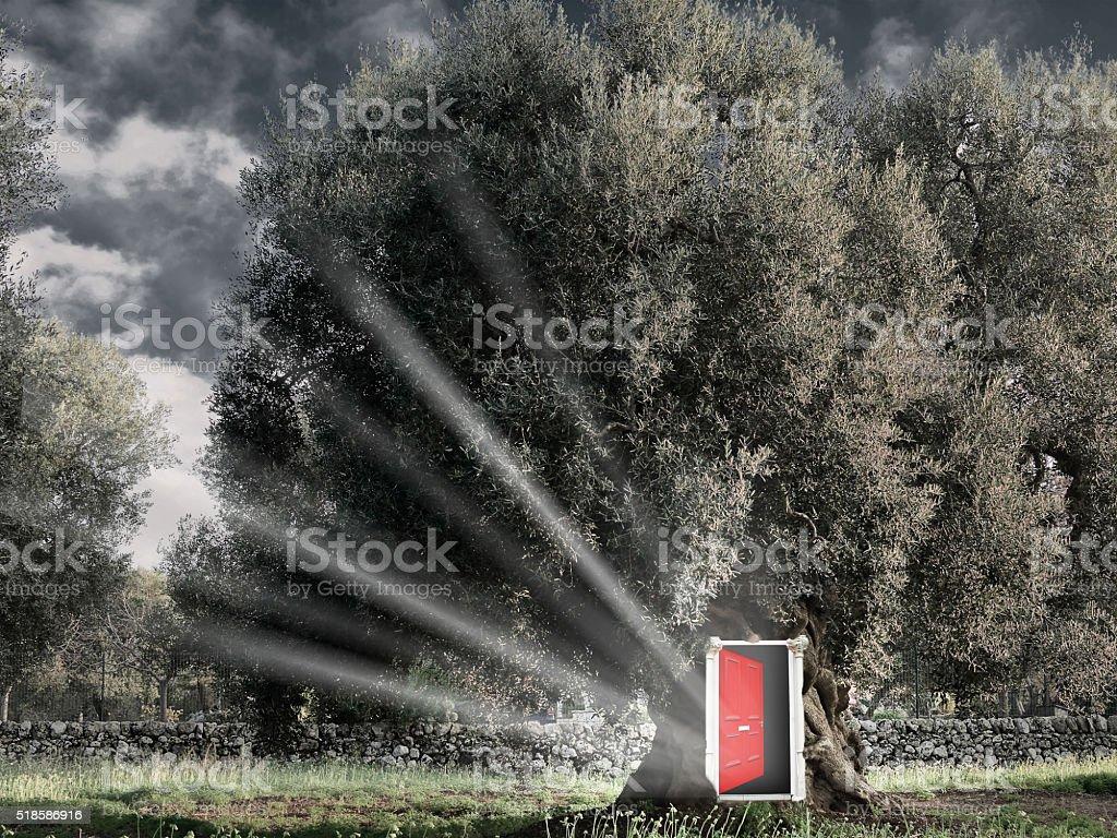 Red open door in the tree. stock photo
