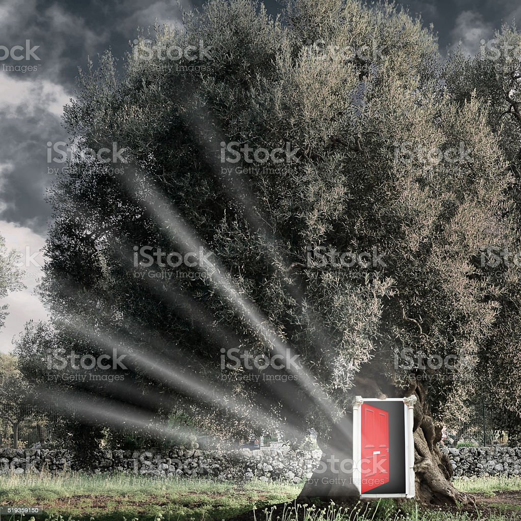 Red open door in the tree. stock photo