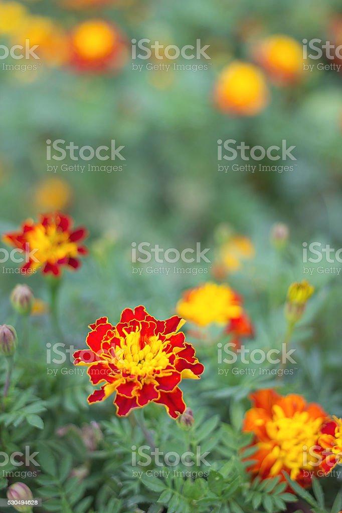 red orange flower stock photo