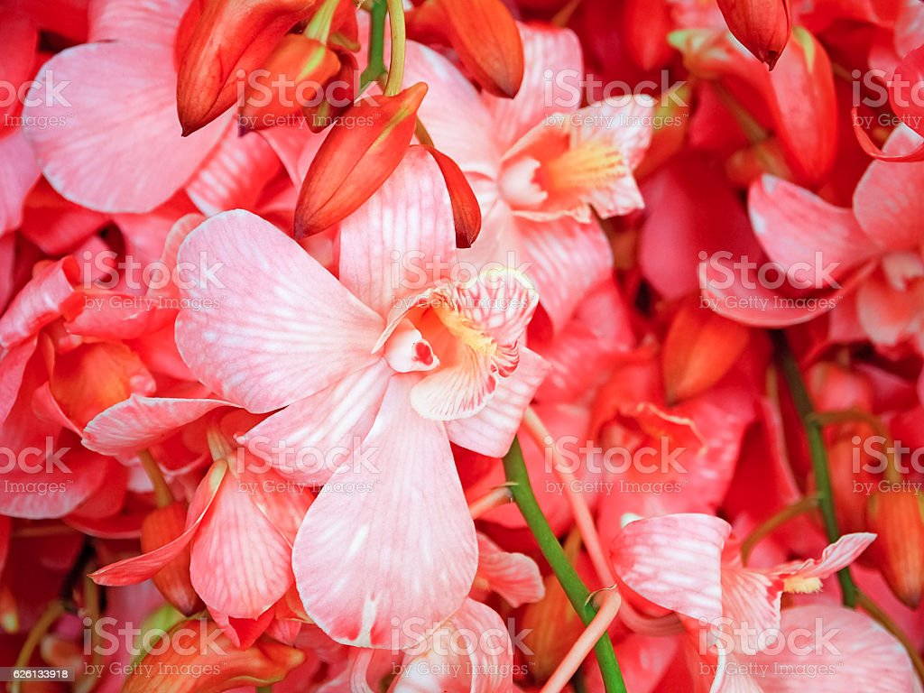 Red orchid on the background in garden stock photo