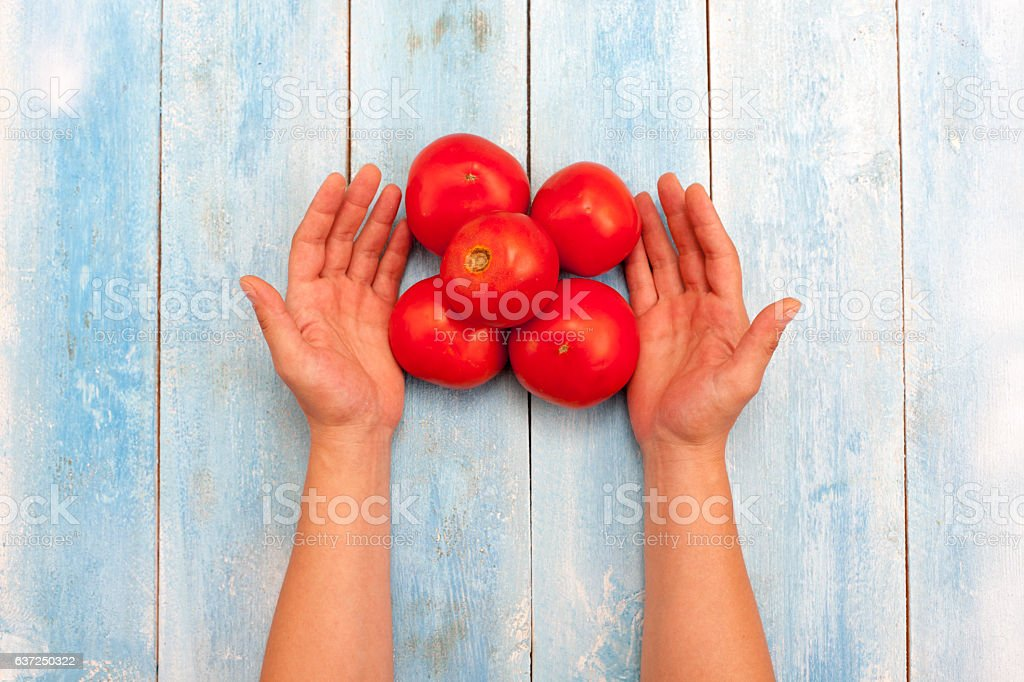 Red organic tomatoes in hands on blue wooden board stock photo
