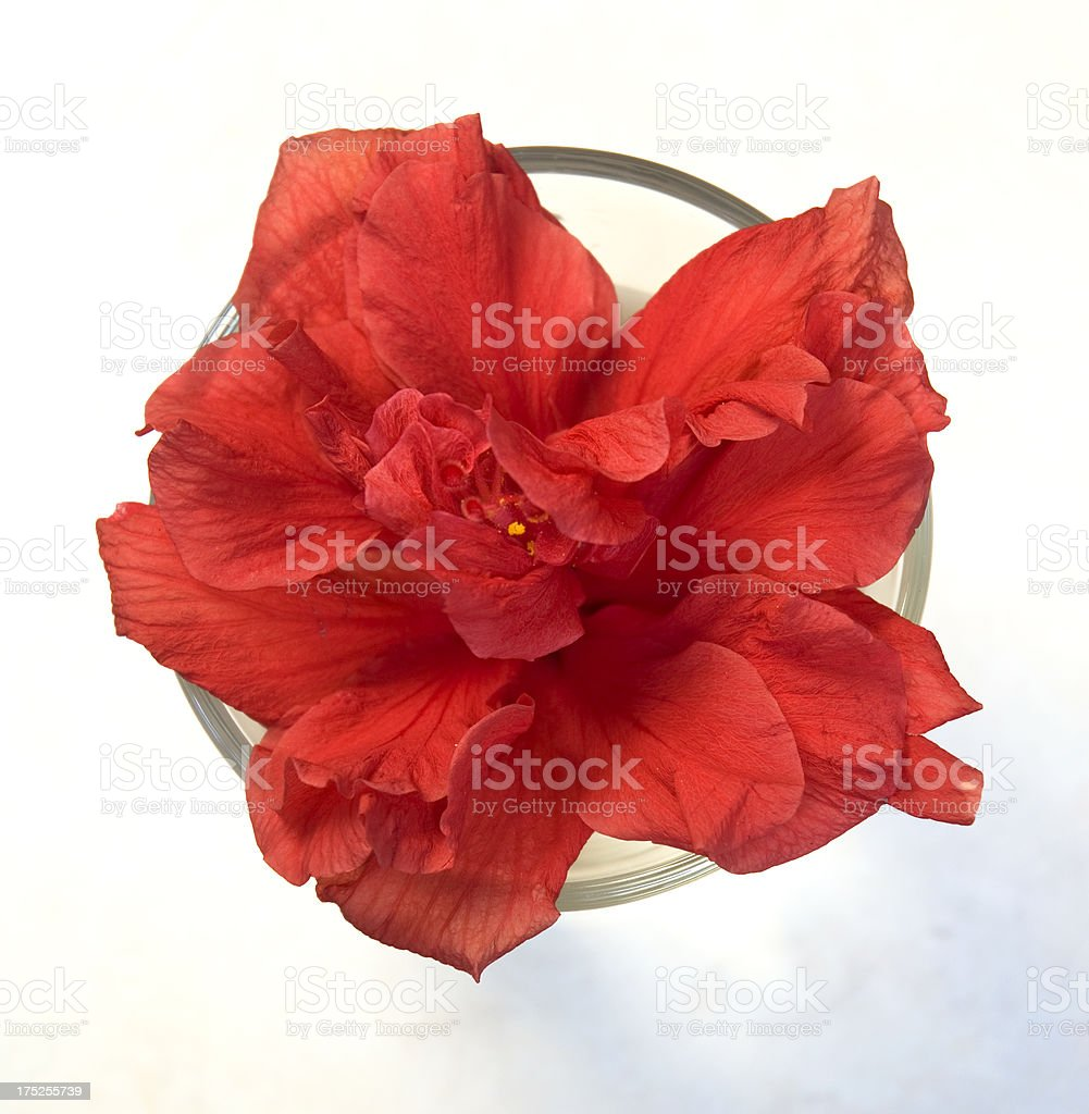 Red Passion Flower In Water Glass From Above royalty-free stock photo