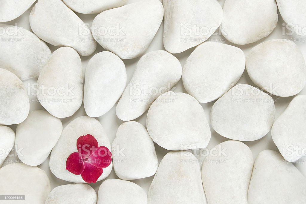 red petals on white pebble background royalty-free stock photo