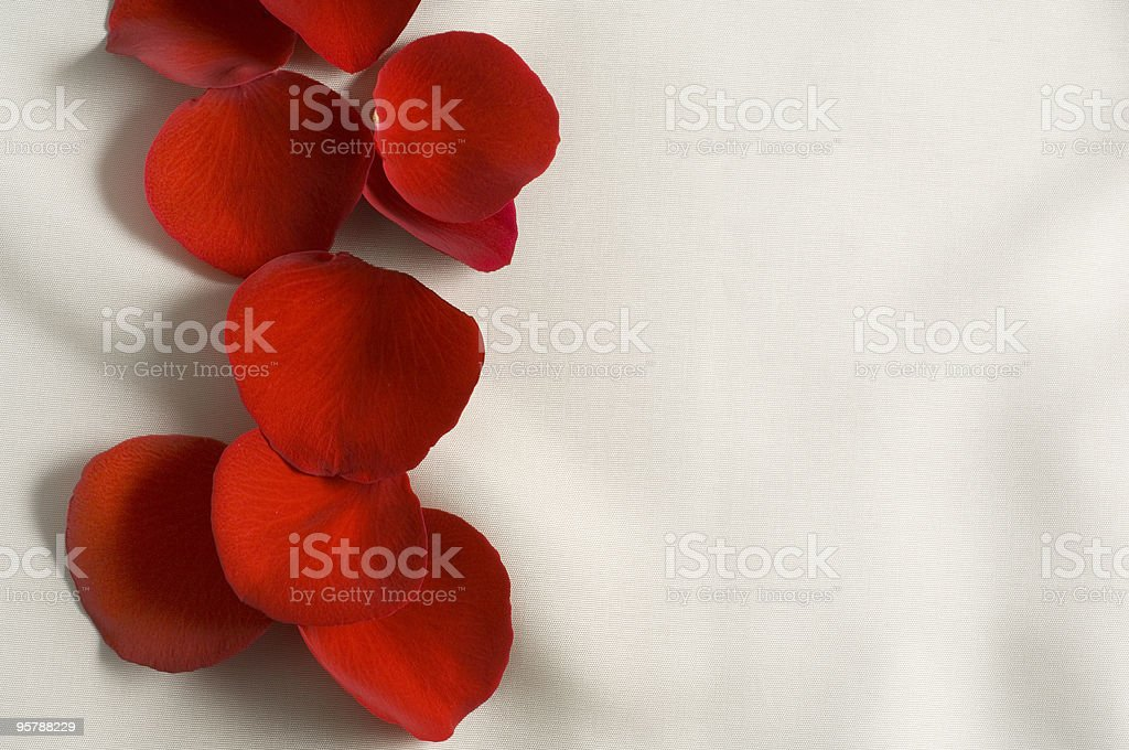Red petals rose royalty-free stock photo