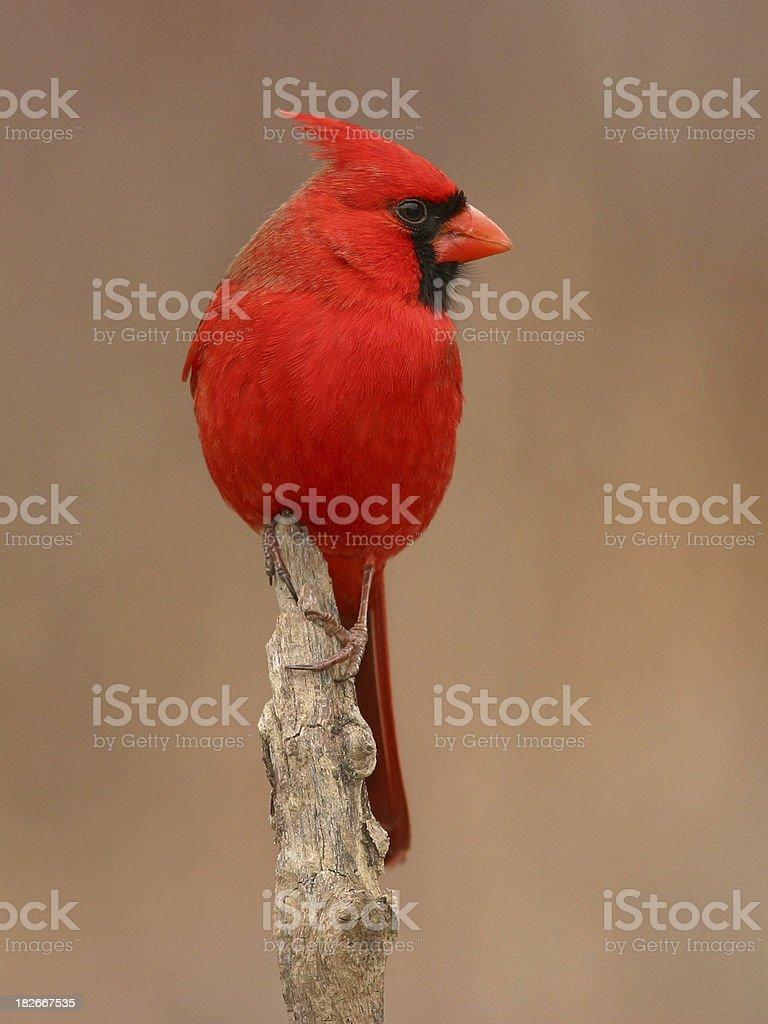 Red stock photo