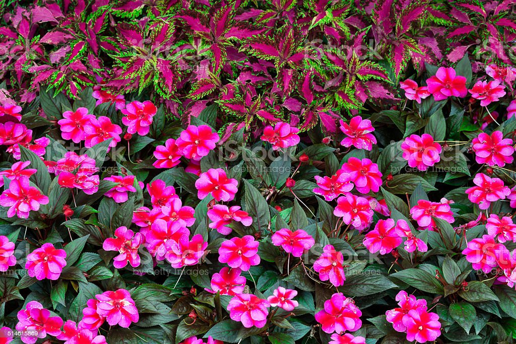 Red, Pink & Purple flowers stock photo
