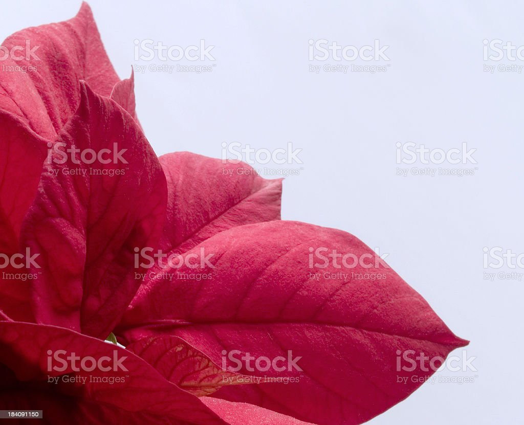Red plant stock photo