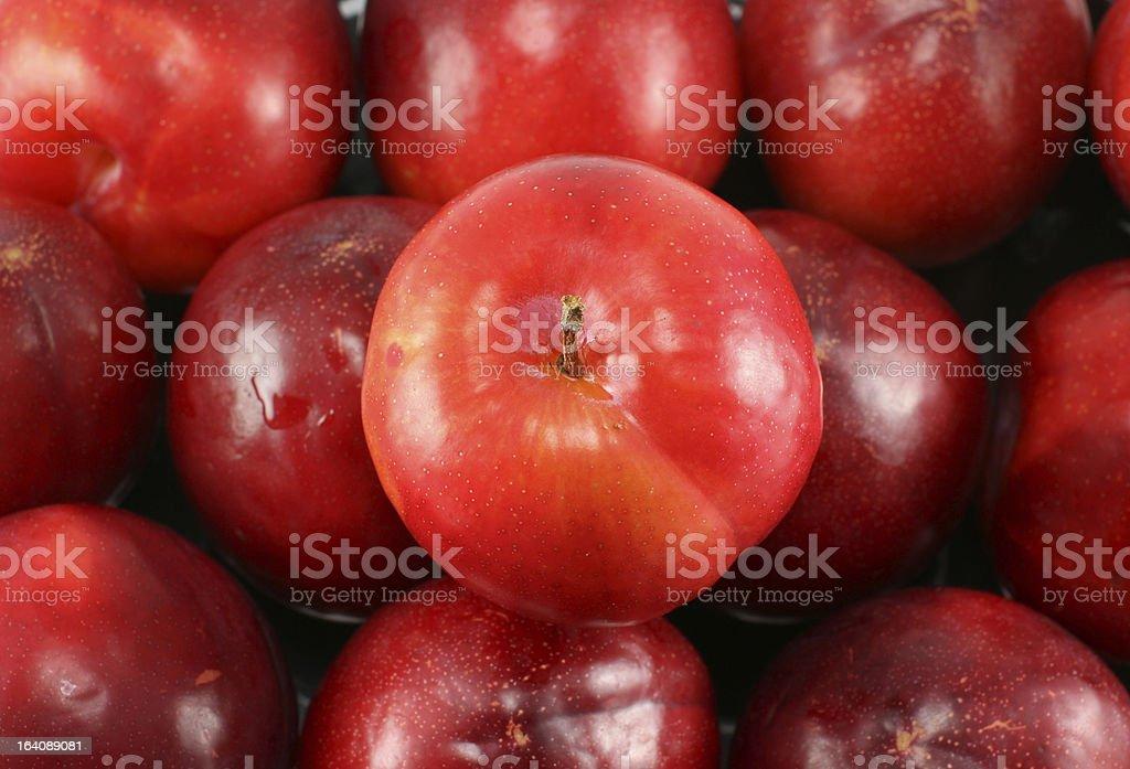 Red Plum Fruit royalty-free stock photo
