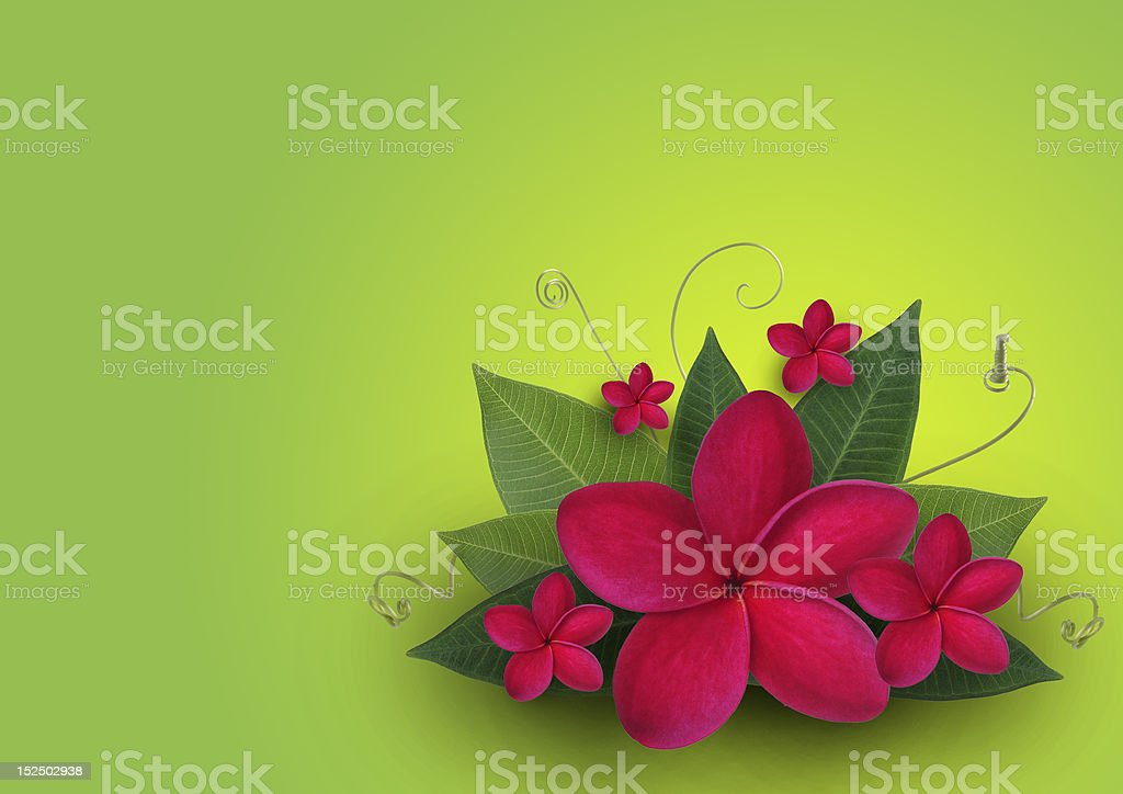 Red Plumeria and green leaf Design royalty-free stock photo