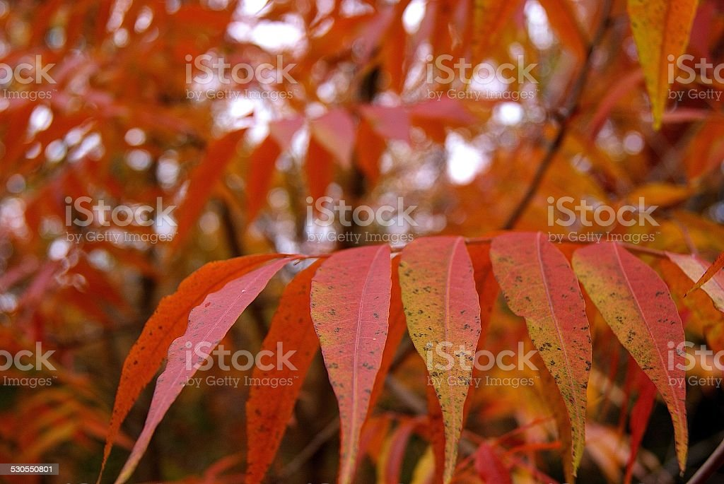 Red Points royalty-free stock photo