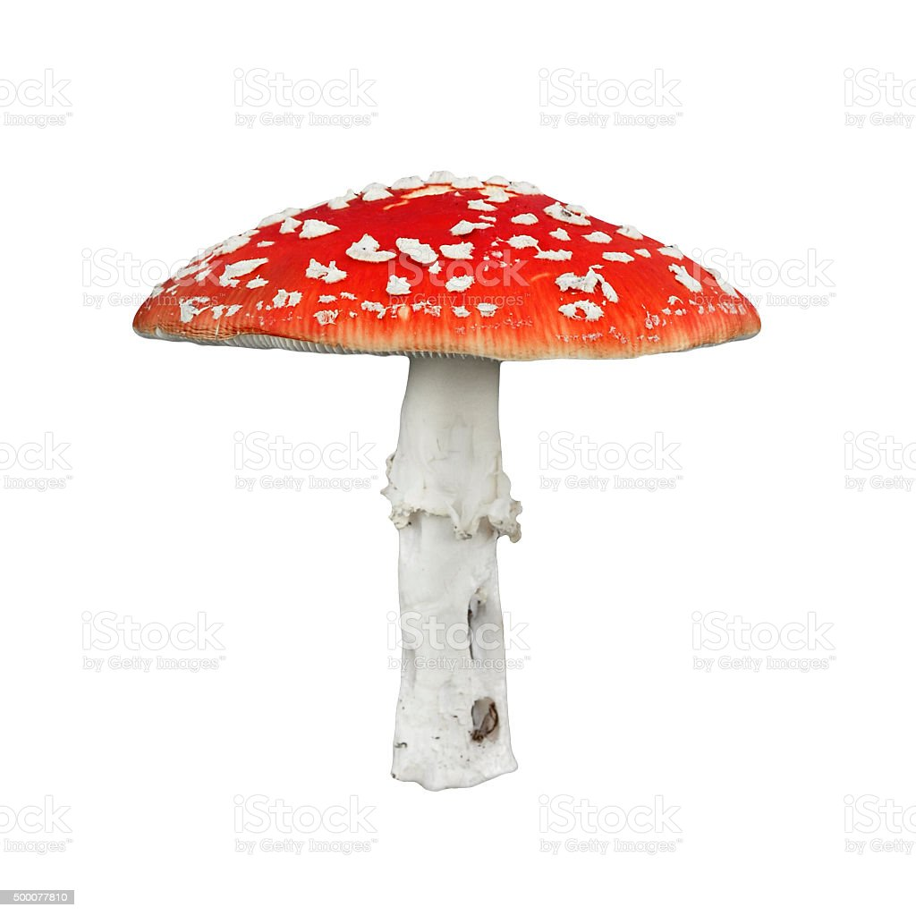 Red poison mushroom stock photo