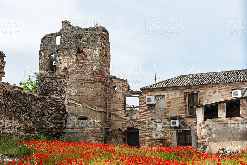 Red poppies and ruins stock photo