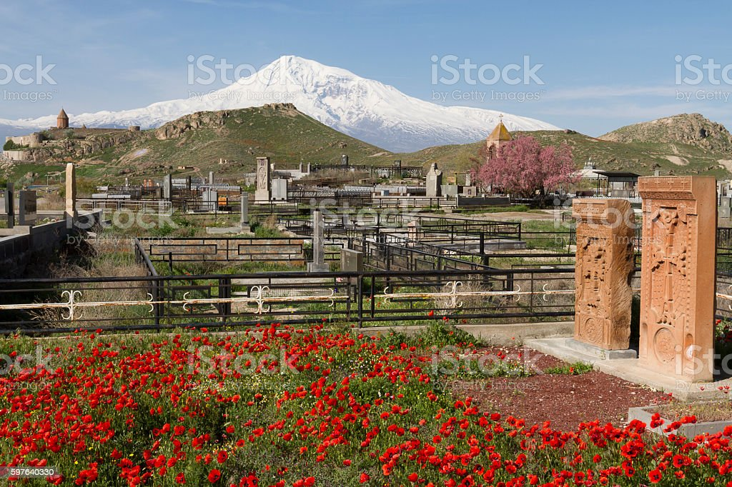 Red poppies and the Mount Ararat in Armenia stock photo