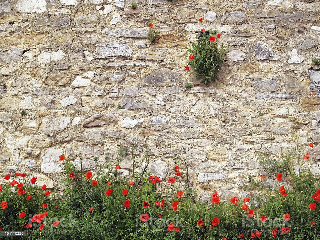 Red poppies on brick background royalty-free stock photo