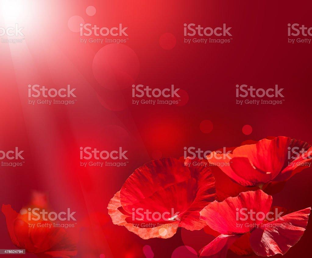 Red poppy background stock photo