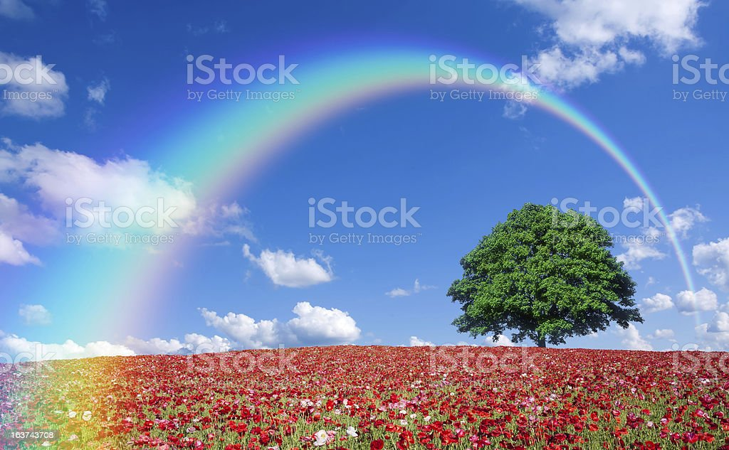 red poppy field and lone tree royalty-free stock photo