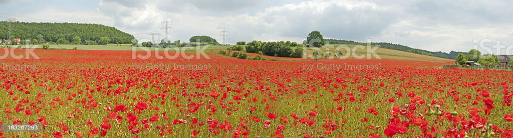 Red poppy field under cloudy sky - panorama royalty-free stock photo