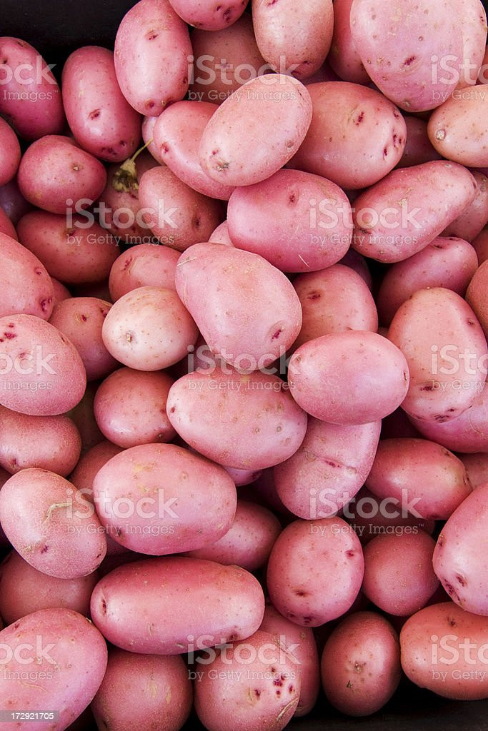 Red potato background royalty-free stock photo