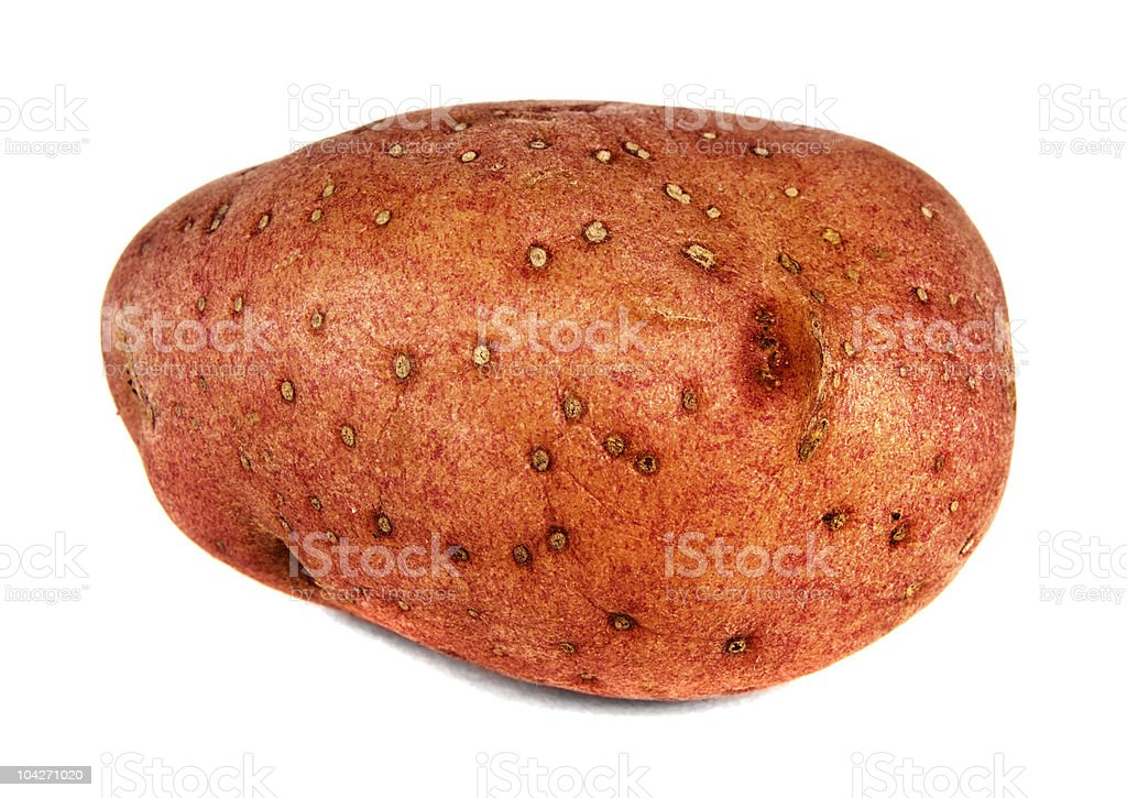Red Potato royalty-free stock photo