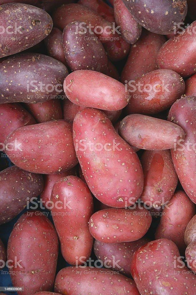 Red potatoe stock photo