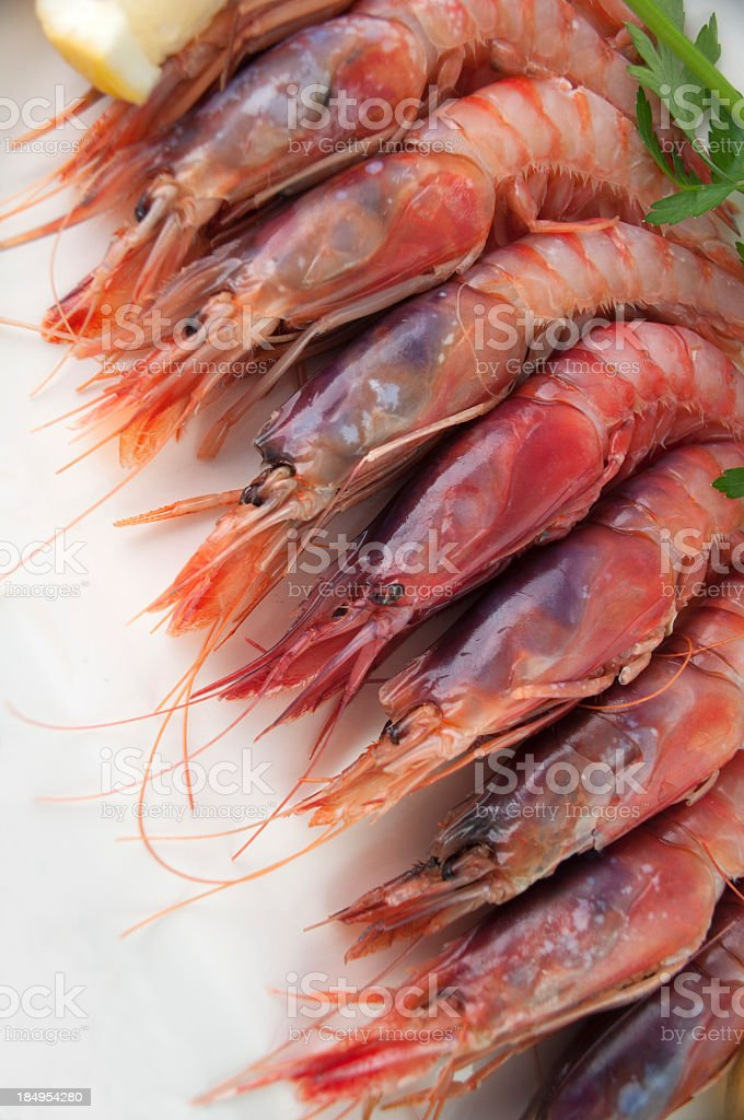 Red prawn royalty-free stock photo