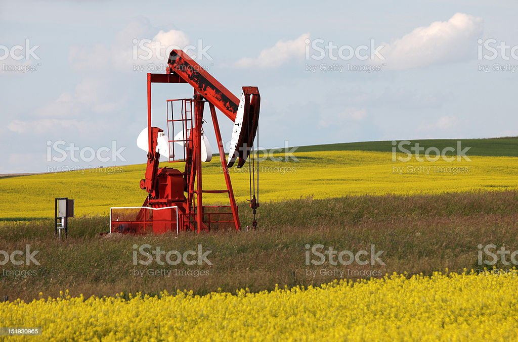 Red Pumpjack in a Canola Field royalty-free stock photo