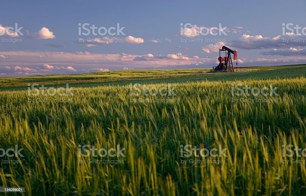 Red Pumpjack in Wheat Field on the Rolling Alberta Plains stock photo