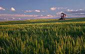 Red Pumpjack in Wheat Field on the Rolling Alberta Plains