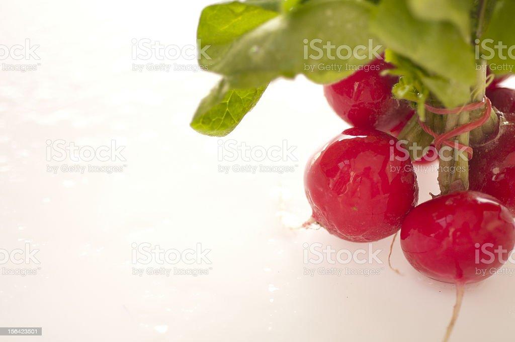 Red radish isolated on white background royalty-free stock photo