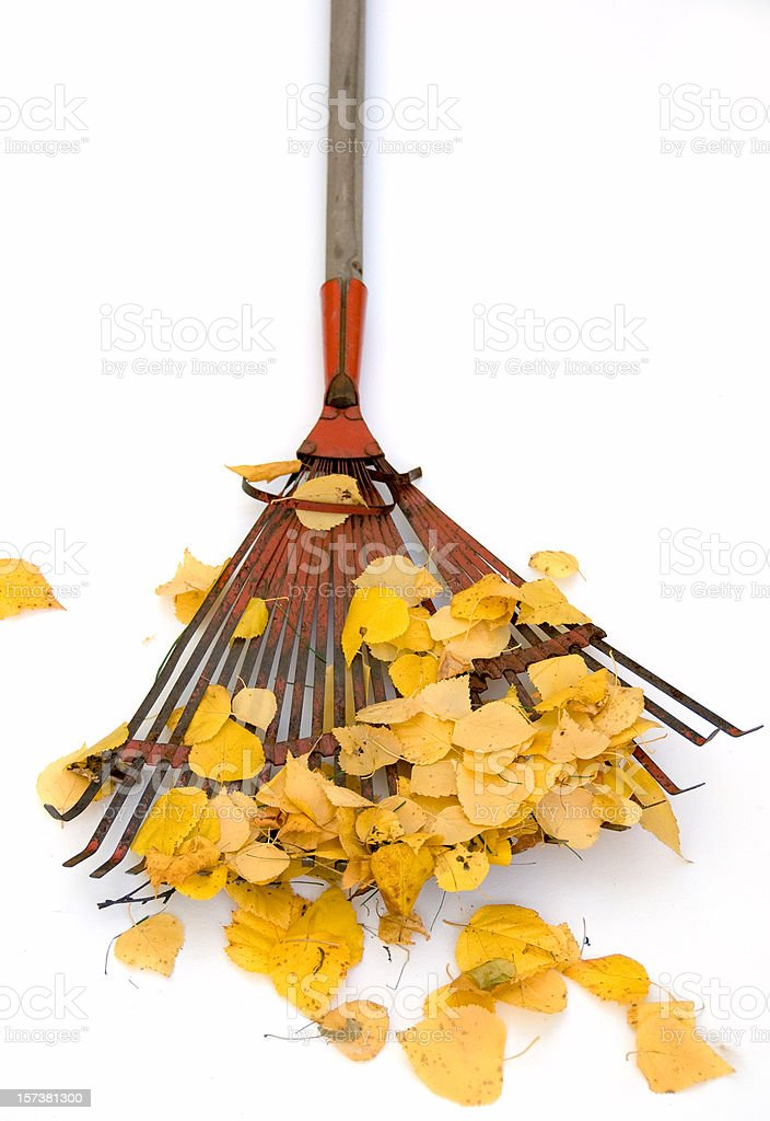 Red Rake and Autumn Leaves royalty-free stock photo