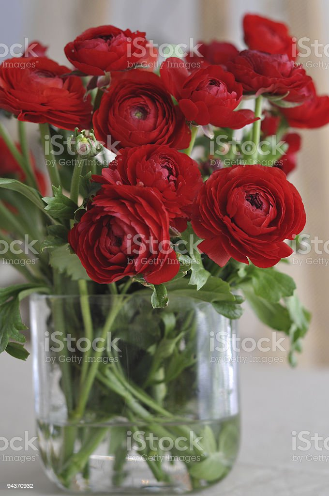 Red Ranunculus in the vase royalty-free stock photo